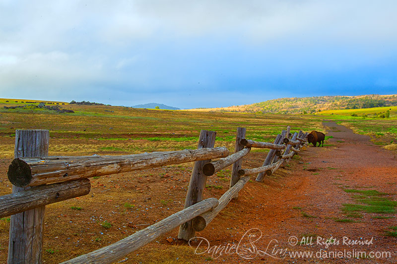 A lone Bison at Wichita Mountains Prairie Field