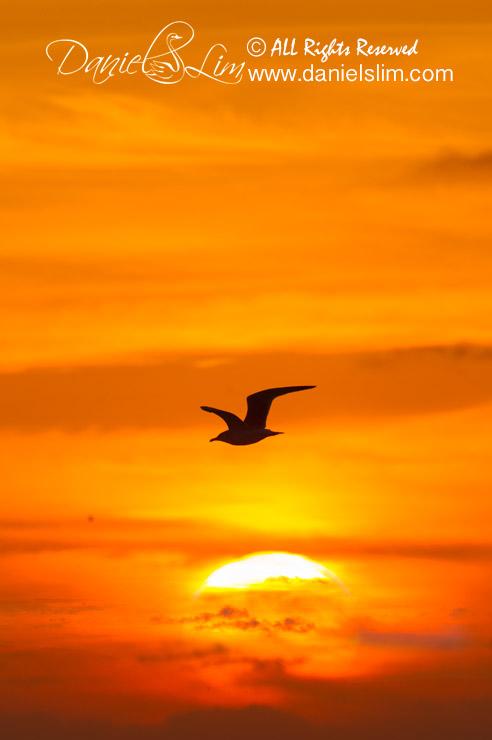 Sunrise and Seagull Silhouette at Quintana Beach, Texas